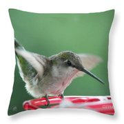 Female Ruby-throated Hummingbird Throw Pillow