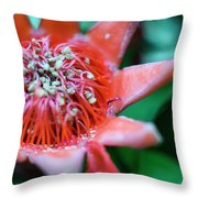 Royal Botanical Garden Of Madrid Throw Pillow