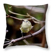 9343-00-ruby-crowned Kinglet Throw Pillow