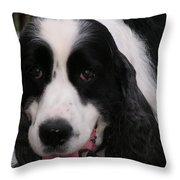#940 D1049 Farmer Browns Springer Spaniel Throw Pillow