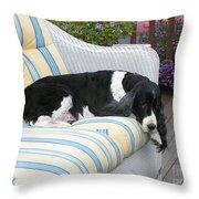 #940 D1061 Farmer Browns Springer Spaniel Throw Pillow
