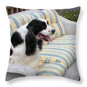 #940 D1072 Farmer Browns Springer Spaniel Taking A Break Throw Pillow