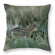 A 13-lined Ground Squirrel At The Henry Throw Pillow