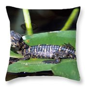 A Baby Alligator Resting On A Lilly Pad Throw Pillow