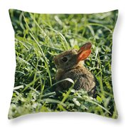 A Baby Cottontail Rabbit Sits Among Throw Pillow
