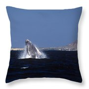 A Baby Humped Backed Whale Breeching In Banderous Bay Mexico Throw Pillow