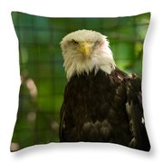 A Bald Eagle At The Lincoln Zoo Throw Pillow
