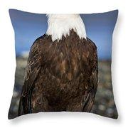 A Bald Eagle Throw Pillow