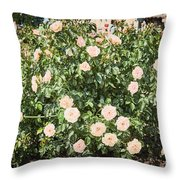 A Beautiful Rose Bush Castle Park 6 Throw Pillow
