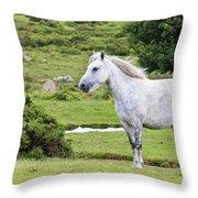 A Beautiful White Dartmoor Pony, Devon, England Throw Pillow