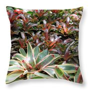 A Bevy Of Bromeliads Throw Pillow
