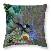 A Bi-color Damselfish Amongst The Coral Throw Pillow