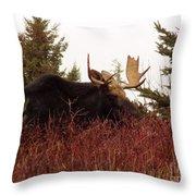 A Big Fierce-eyed Bull Moose Throw Pillow