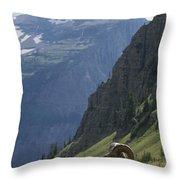 A Bighorn Sheep Ram, Ovis Canadensis Throw Pillow