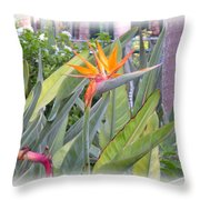 A Bird In Paradise Throw Pillow