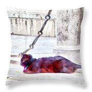 A Black Cat With A Blue-and-pink Collar Throw Pillow