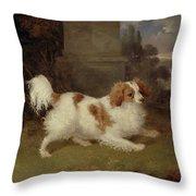 A Blenheim Spaniel Throw Pillow by William Webb