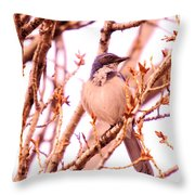 Western Scrub Jay Throw Pillow