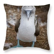 A Blue Footed Booby Looks At The Camera Throw Pillow