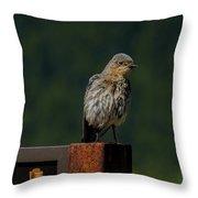A Bluebird Welcome Throw Pillow