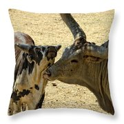 A Bovine Love Throw Pillow