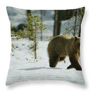 A Brown Bear Ursus Arctos Walks Throw Pillow