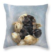 A Bucket Of Chicks Throw Pillow