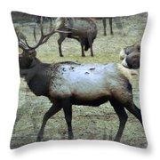 A Bull Elk  Throw Pillow