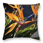 A Bunch Of Bird Of Paradise Flowers Bloomed  Throw Pillow