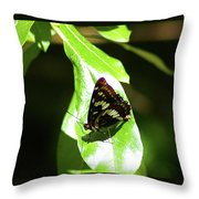 A Butterfly In The Sun  Throw Pillow