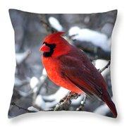 A Cardinal Day... Throw Pillow