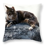 A Cat From Rome Throw Pillow