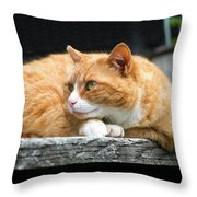 A Cat Named 'kitty' Throw Pillow