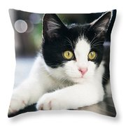 A Cat With Black And White Fur Throw Pillow