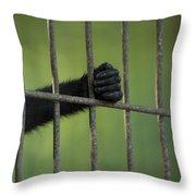 A Celebes Macaque Macaca Nigra Holds Throw Pillow