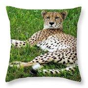 A Cheetah Resting On The Grass Throw Pillow