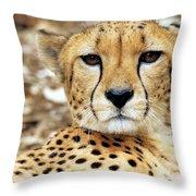 A Cheetah's Portrait Throw Pillow