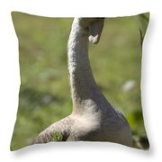 A Chinese Goose Anser Cygnoides At Zoo Throw Pillow