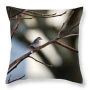 A Chipping Sparrow Throw Pillow
