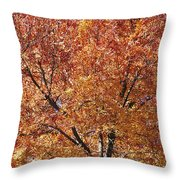 A Claret Ash Tree In Its Autumn Colors Throw Pillow