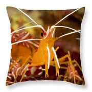 A Cleaner Shrimp Perches On An Exposed Throw Pillow