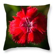 A Close Up Of A Dianthis Flower Throw Pillow