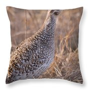 A Close-up Of A Sharptail Grouse Throw Pillow