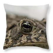 A Close-up Of A Toad Found In Dunbar Throw Pillow