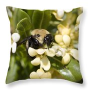 A Close View Of A Bumblebee Pollinating Throw Pillow