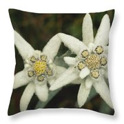 A Close View Of An Edelweiss Flower Throw Pillow