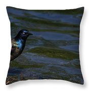 A Common Grackle Throw Pillow