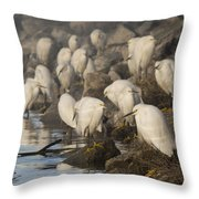 A Congregation Of Egrets Throw Pillow