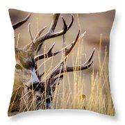A Couple Of Bucks Throw Pillow