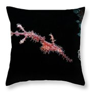 a couple of Ghostpipefishes Throw Pillow
